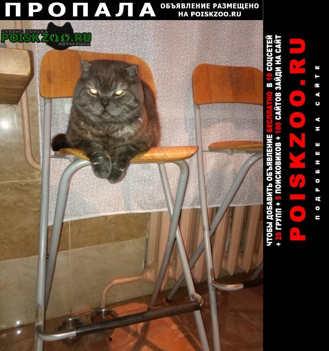 Пушкино Пропала кошка кот