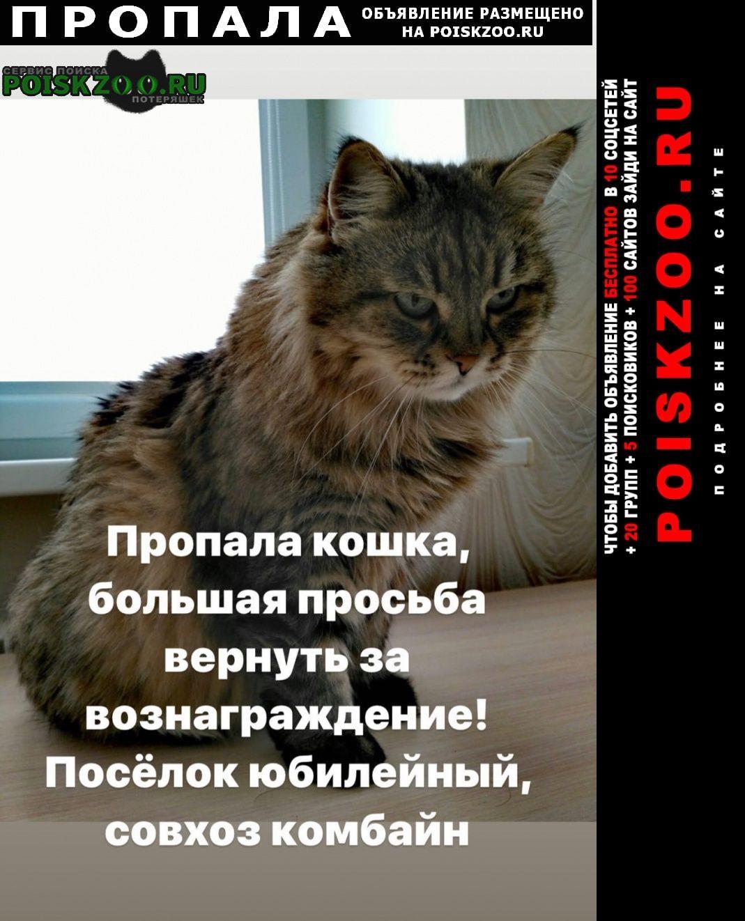 Саратов Пропала кошка кошке 15 лет