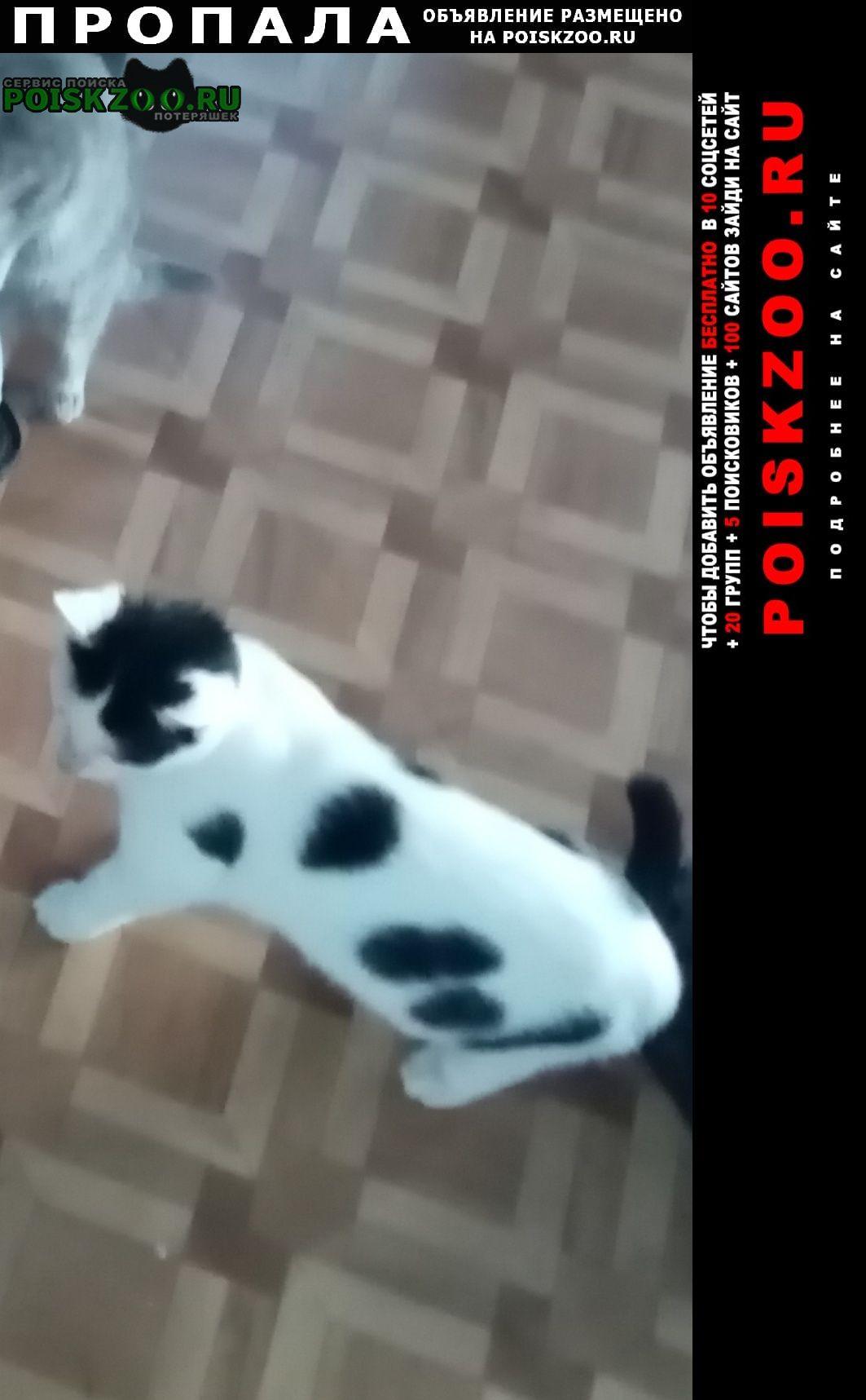Пропало домашнее животное котенок Пятигорск