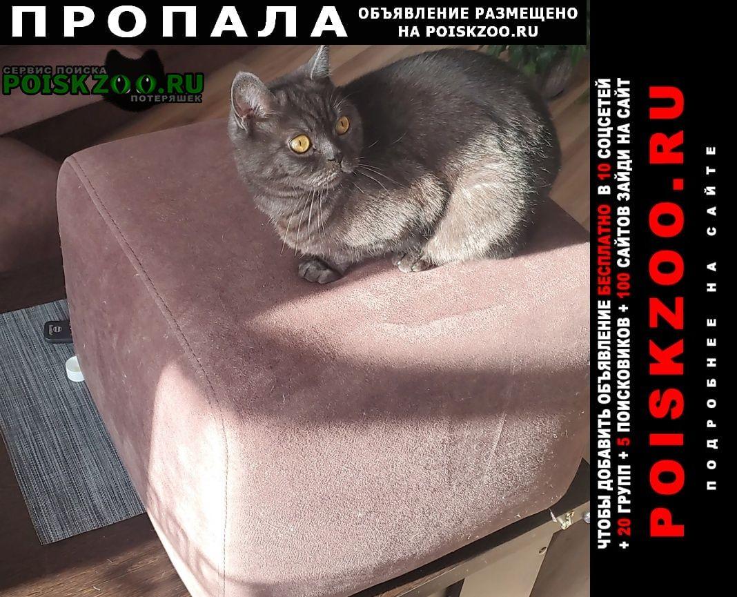 Пропала кошка выбежал из машины Красноярск