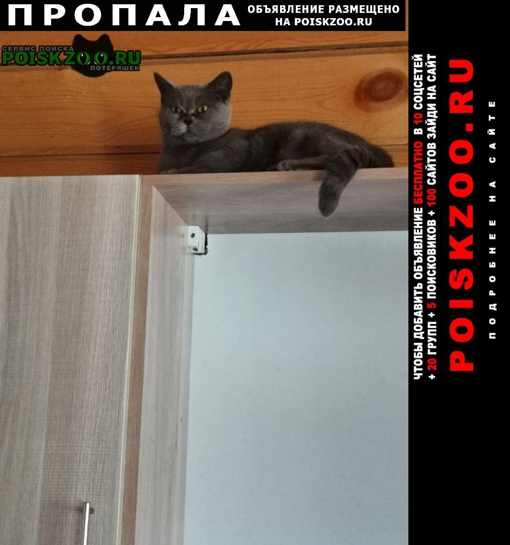 Пропала кошка Барнаул