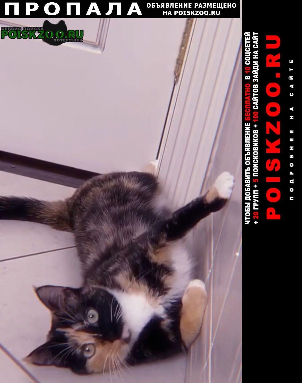 Пропала кошка Фирсановка