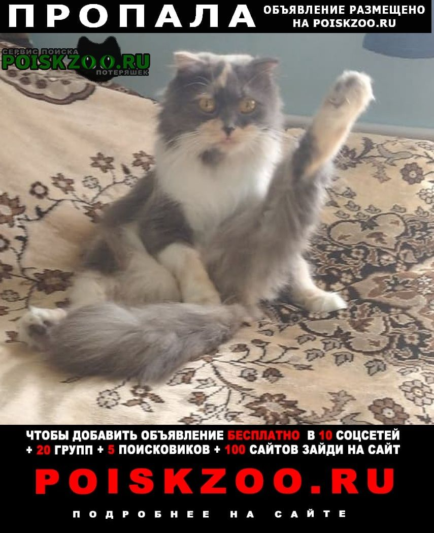 Пропала кошка Ханты-Мансийск
