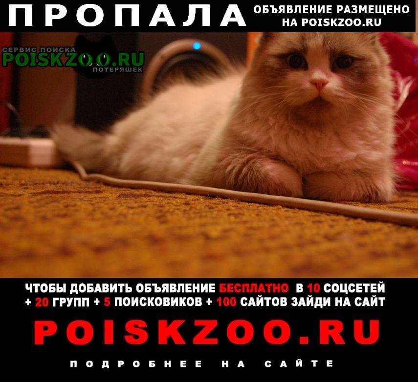 Пропала кошка Атамановка