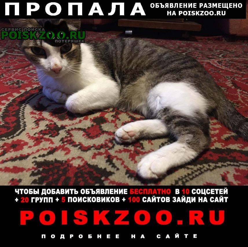 Пропала кошка.. Ангарск