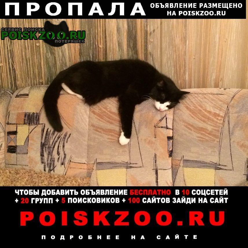 Пропала кошка кот Новосибирск
