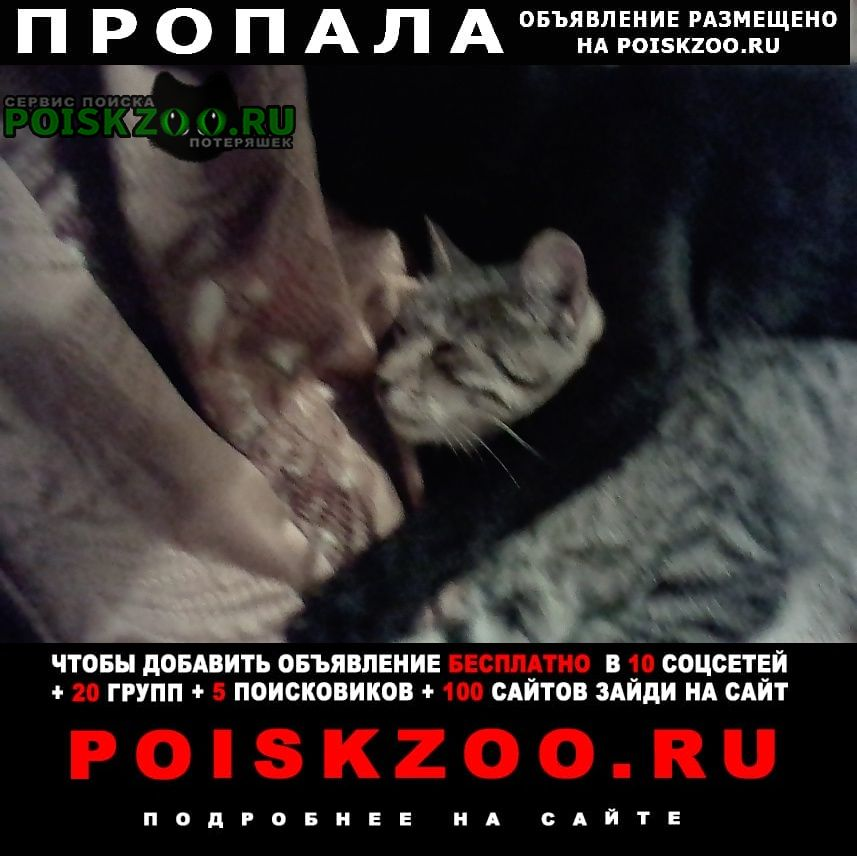 Пропала кошка кот на фотографии серый Волгоград