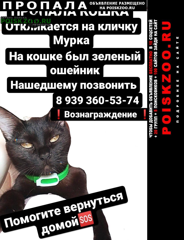 Пропала кошка черная с зеленым ошейником Казань