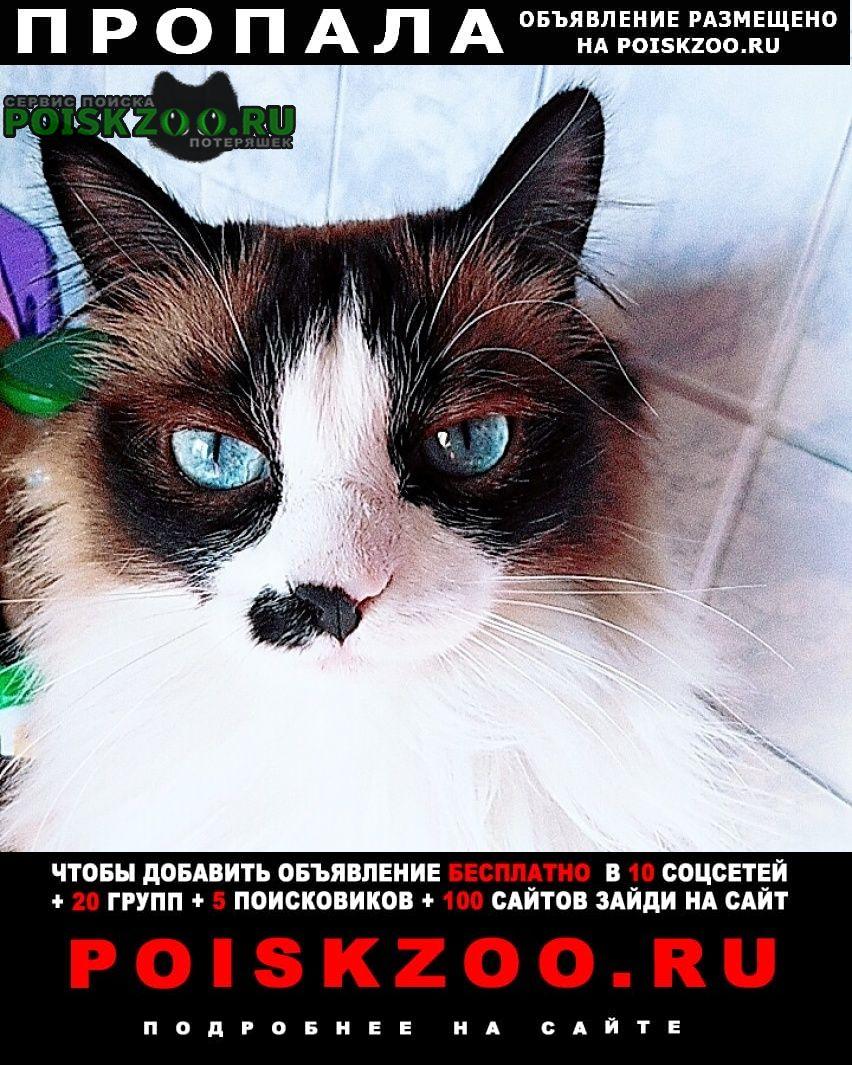 Пропала кошка Ангарск