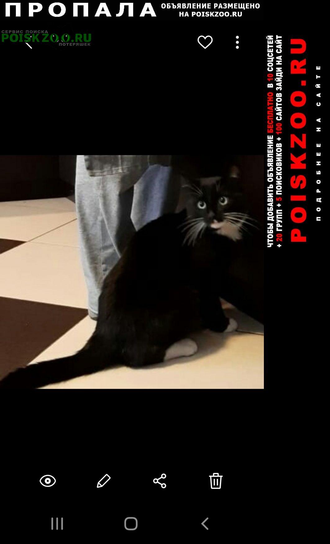 Пропала кошка Киржач