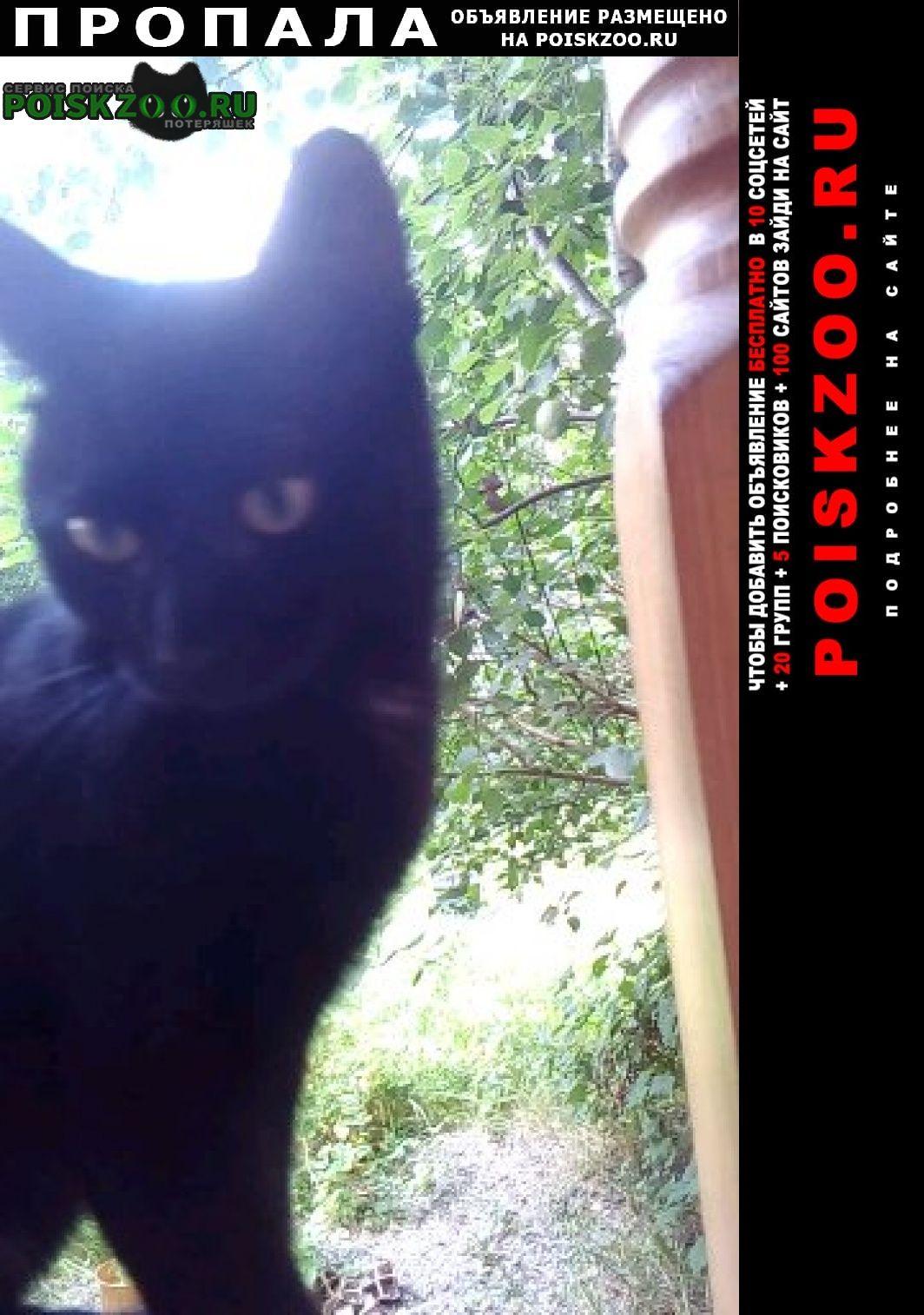 Пропала кошка чёрный котёнок 4 месячный Родники (Московская обл.)