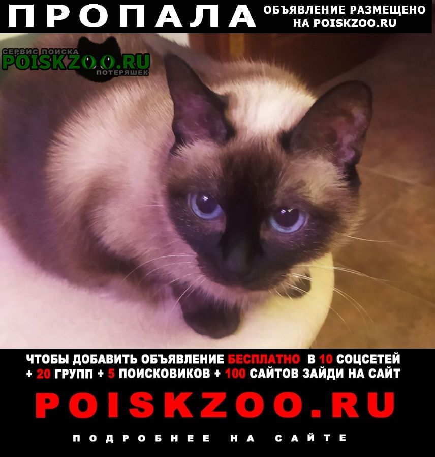 Пропала кошка тайская (старо-сиамская) Москва