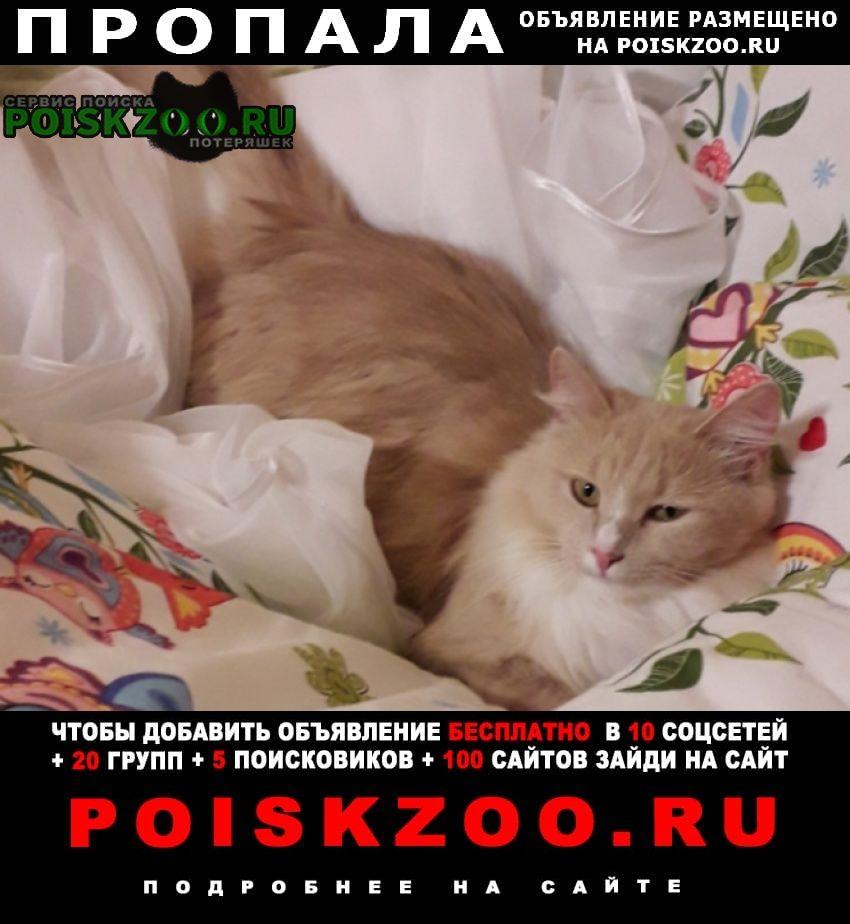Пропала кошка Ярославль