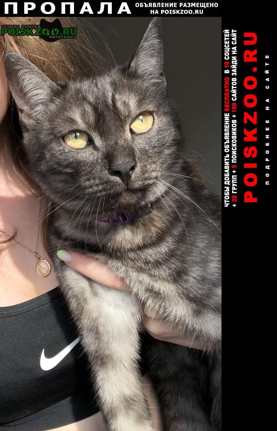 Пропала кошка кот Иркутск