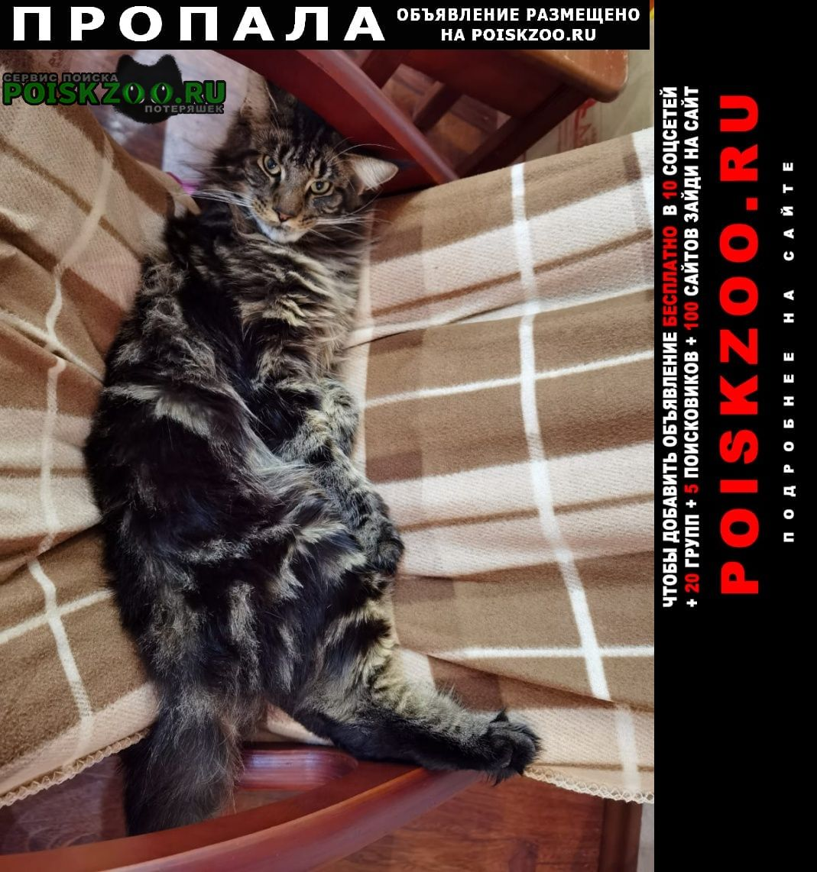 Пропала кошка кот с.ракитное Хабаровск