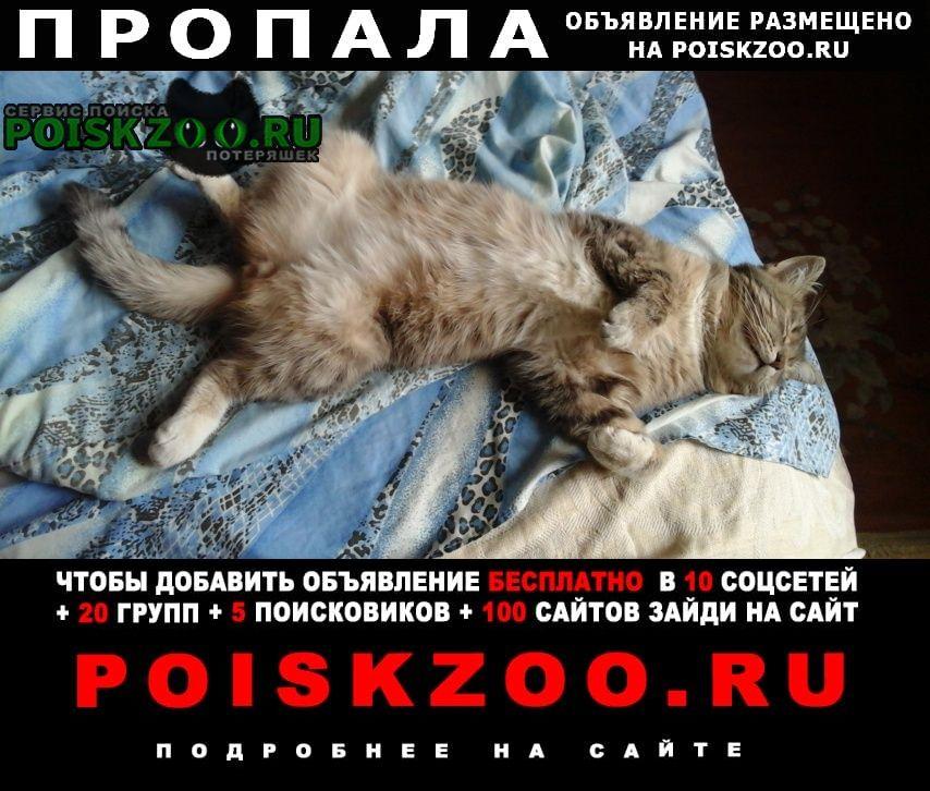 Пропала кошка кот мурзик. Жуковский