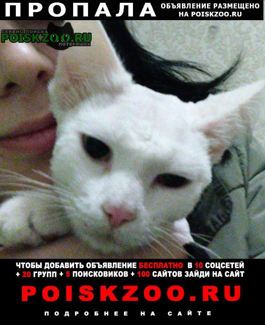 Пропала кошка белый стриженый кот Москва