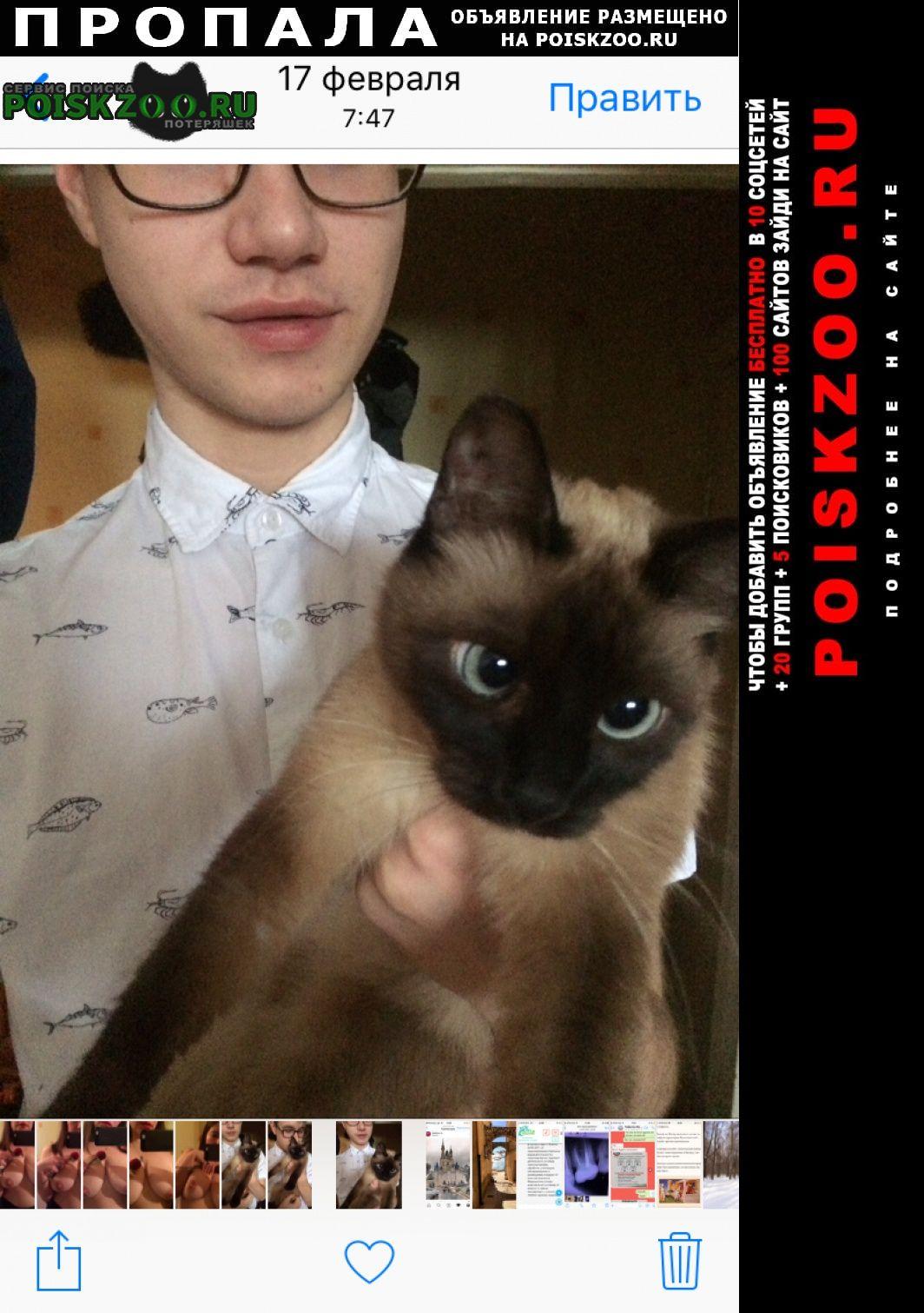 Пропала кошка сиамская 25 октября 2020 года Нижнекамск