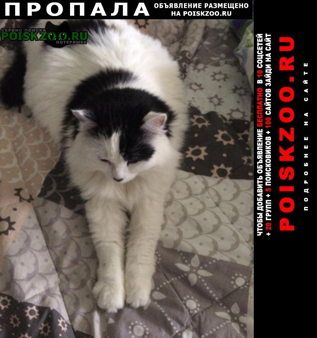 Пропала кошка в уфе посёлок шмидтово Уфа