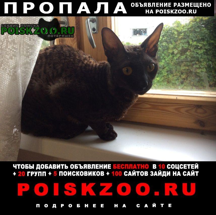 Пропала кошка чёрная 23 октября 2020г. Нижний Новгород