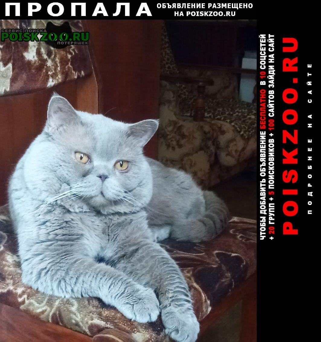 Пропала кошка кот Краснодар