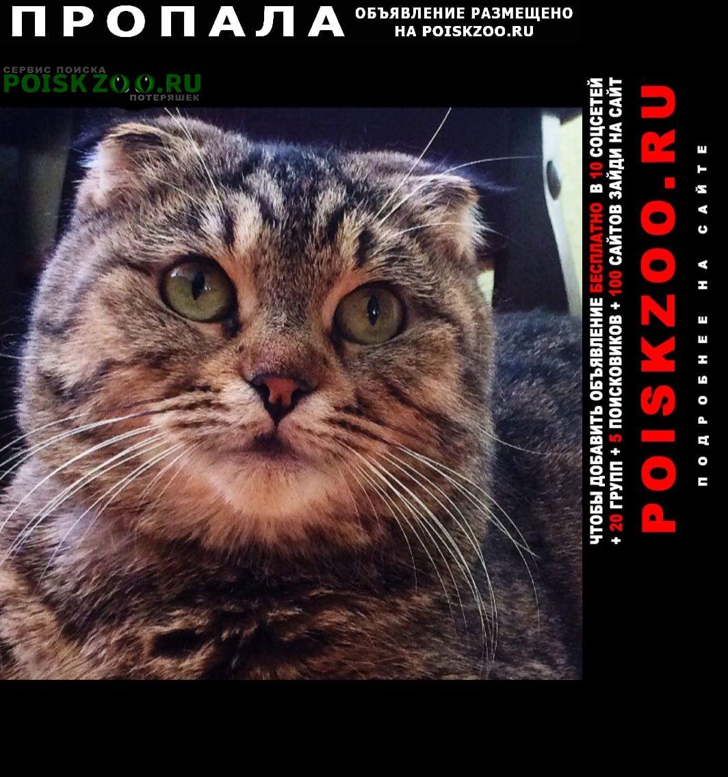 Пропала кошка срочно  Махачкала