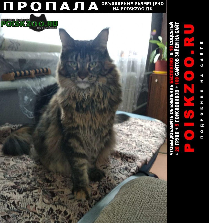 Пропала кошка Кормиловка