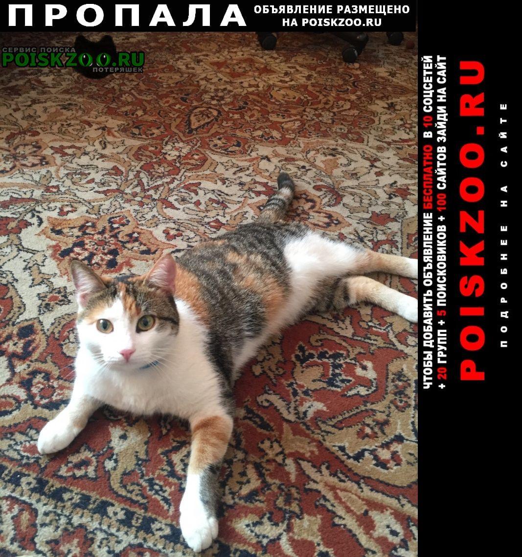 Пропала кошка скорее всего в купчино Санкт-Петербург