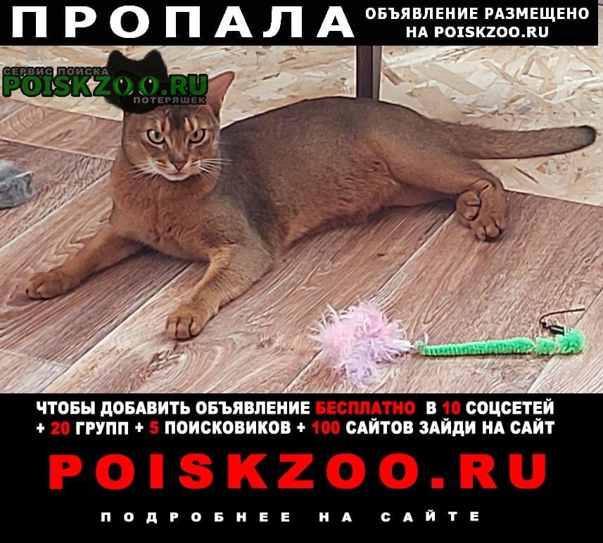 Пропал кот абиссин Раменское
