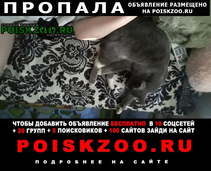 Пропала кошка кот Хабаровск