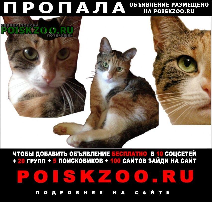 Пропала кошка Петрозаводск