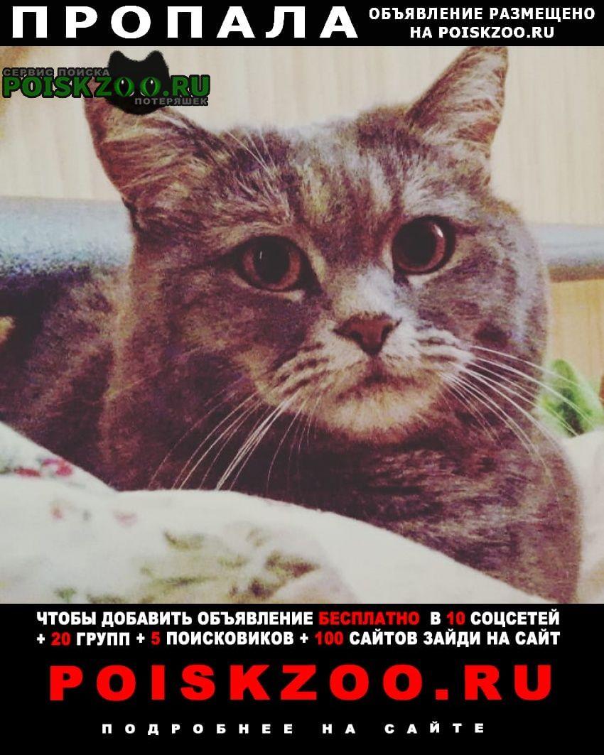 Дубна Пропала кошка