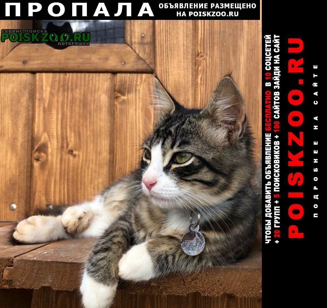 """Пропала кошка котёнок в деревне """"сафонтьево"""" Истра"""