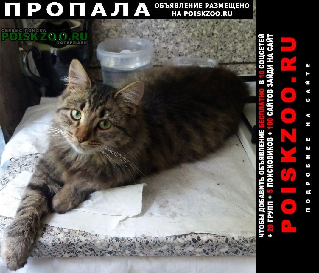 Пропала кошка кот в коптево Москва
