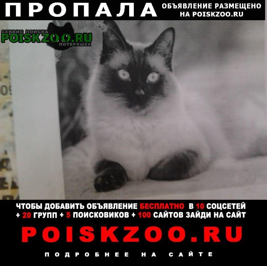 Пропала кошка помогите найти кошку порода сиамская Донецк Донецкая обл.