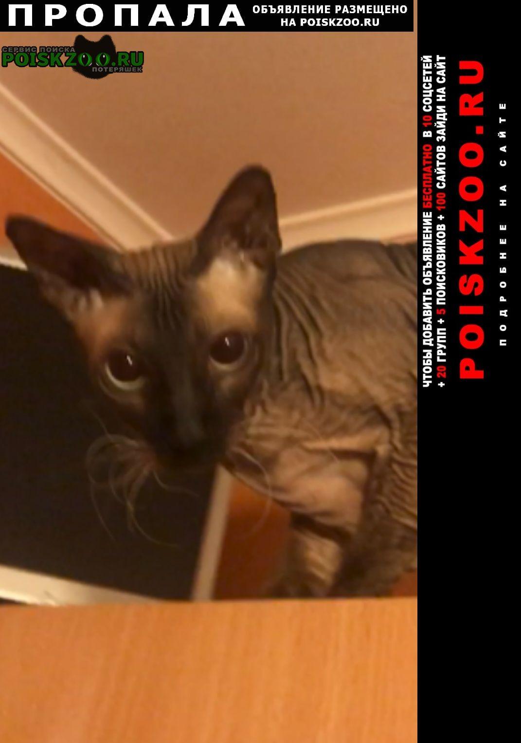 Пропал кот на золотаревского Новороссийск