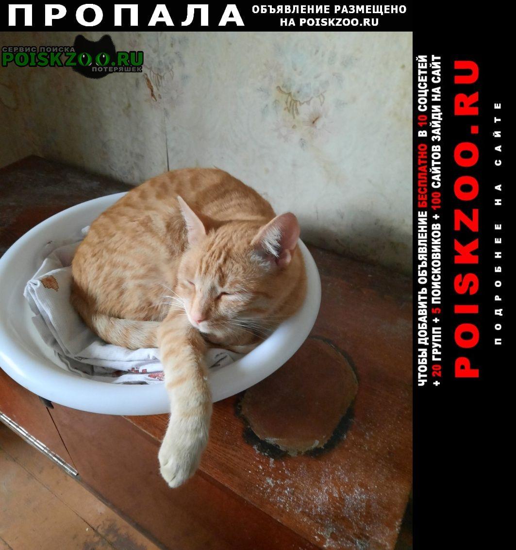 Пропала кошка рыжий, ося, в районе улицы панфилова Истра
