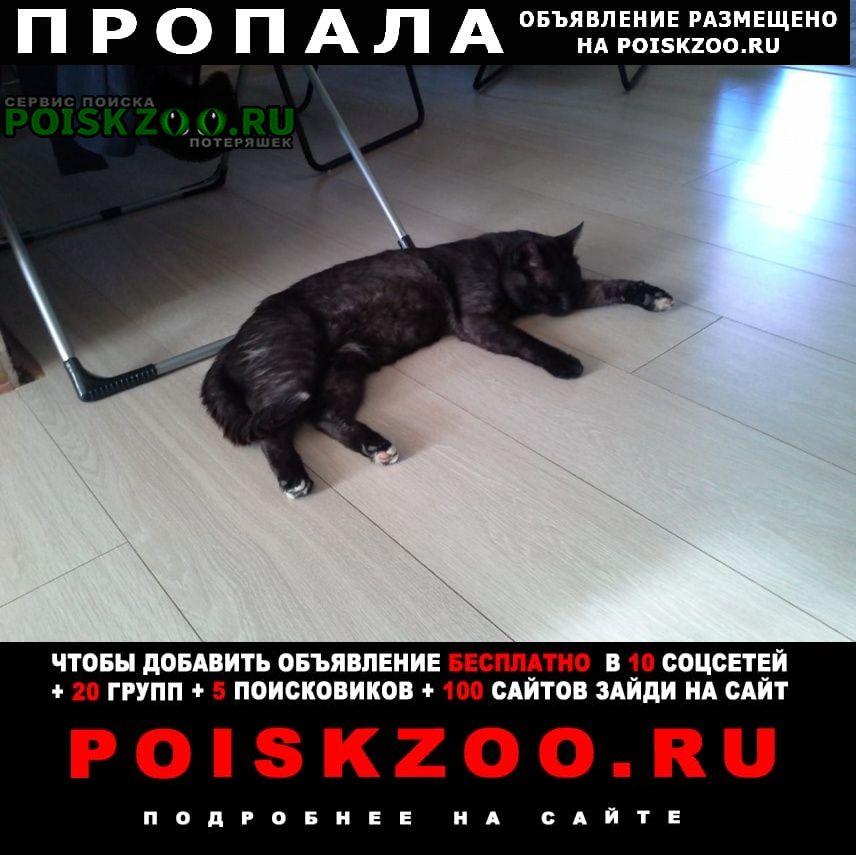 Пропала кошка Воскресенск