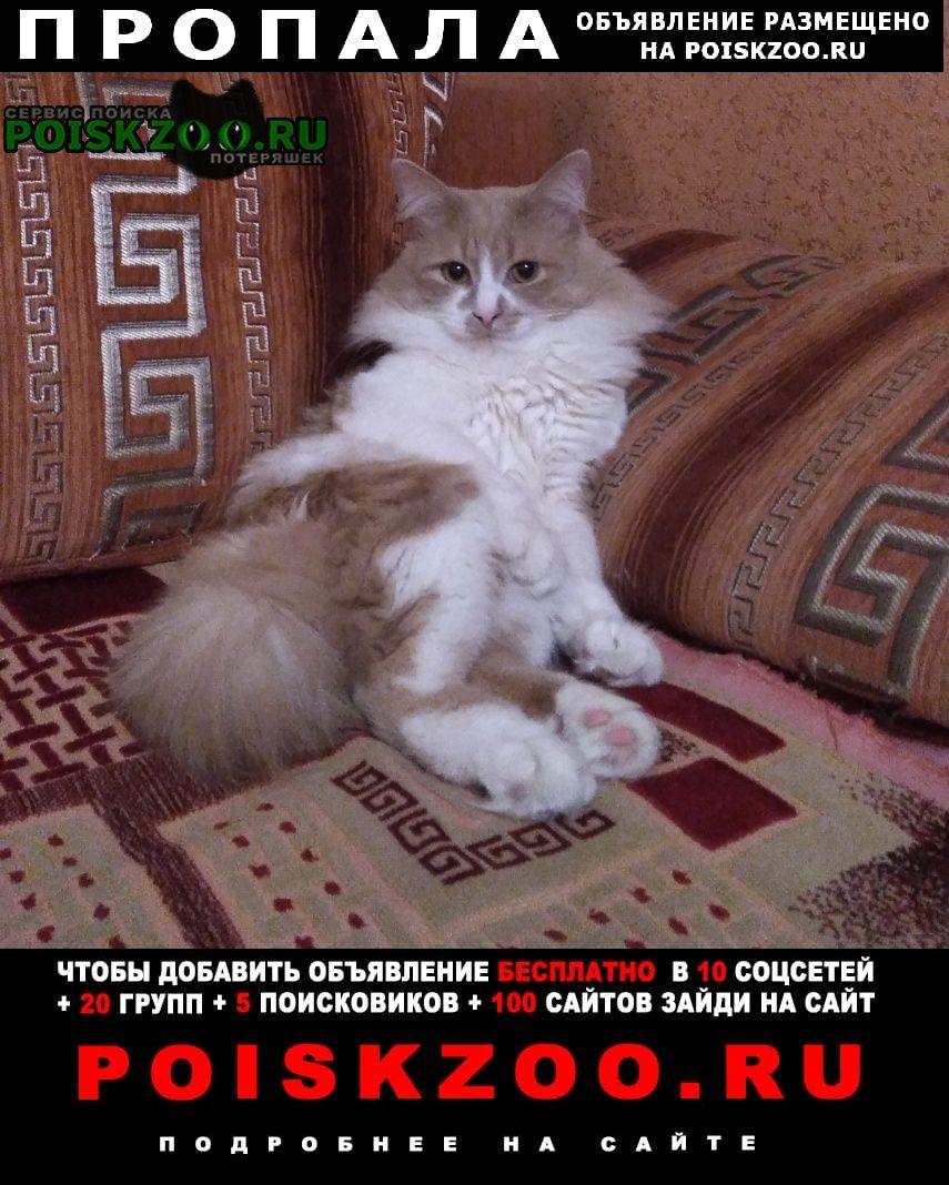 Новомосковск Пропал кот