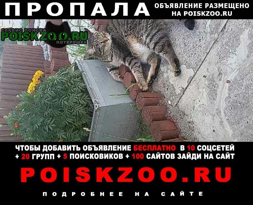 Пропала кошка село богандинское тюменский район Винзили