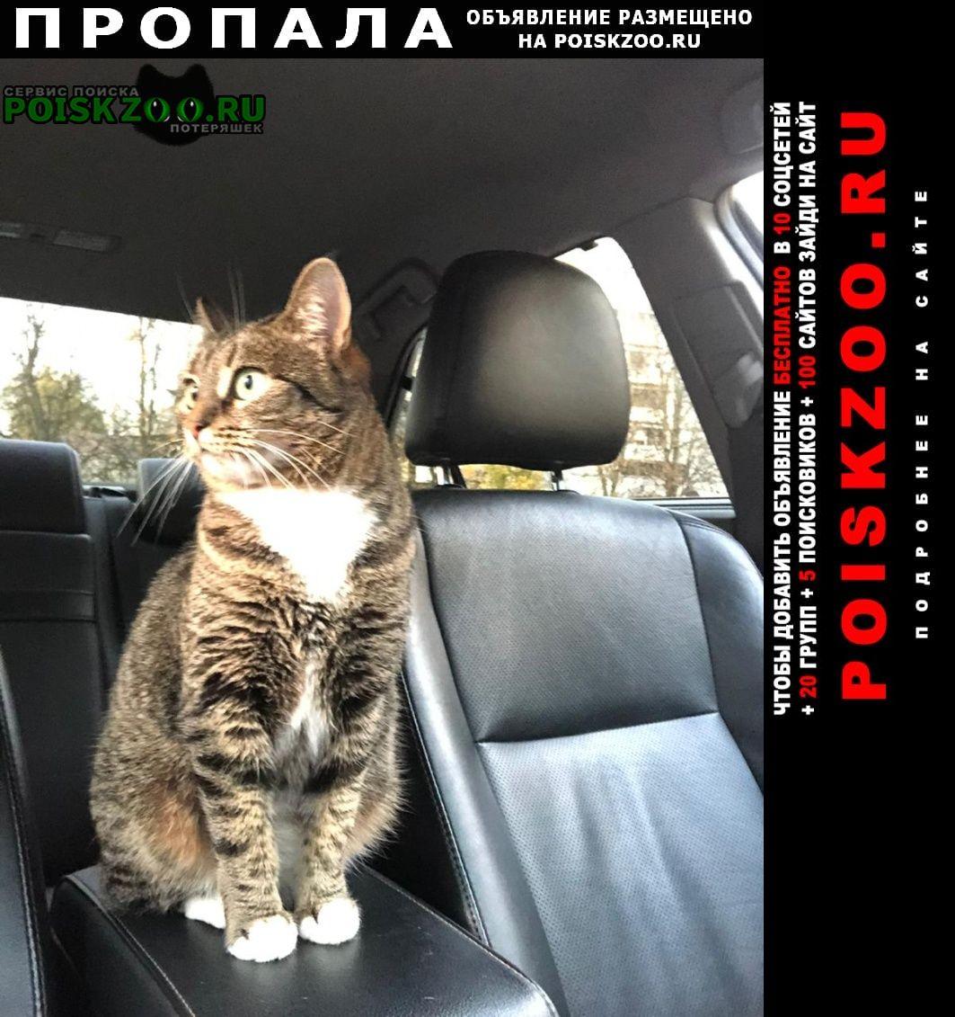Пропала кошка район измайлово Москва