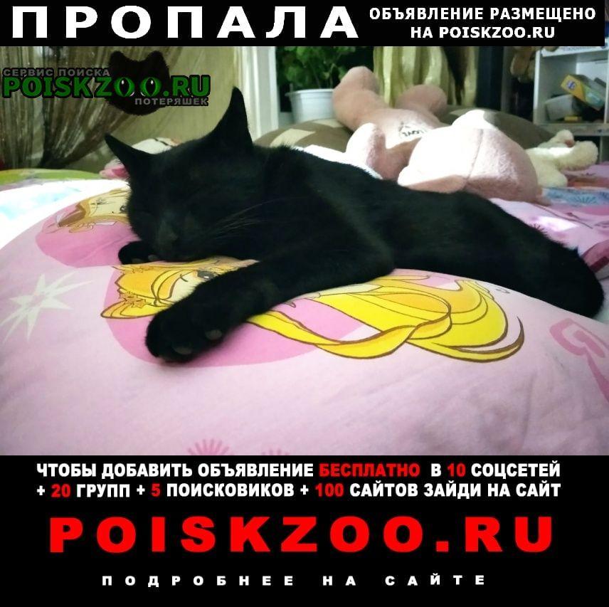 Благовещенск (Амурская обл.) Пропала кошка