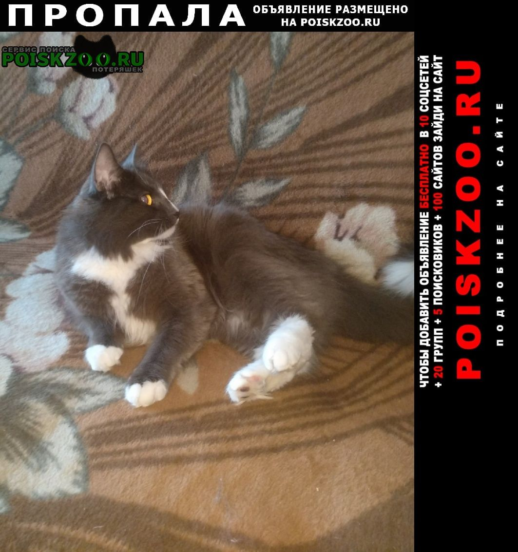 Пропал кот Череповец