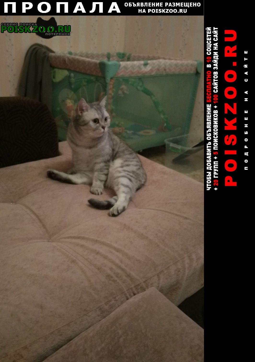 Москва Пропала кошка 16 октября