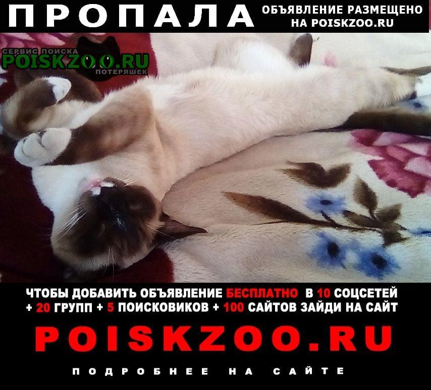 Пропала кошка сиамский кот Томск