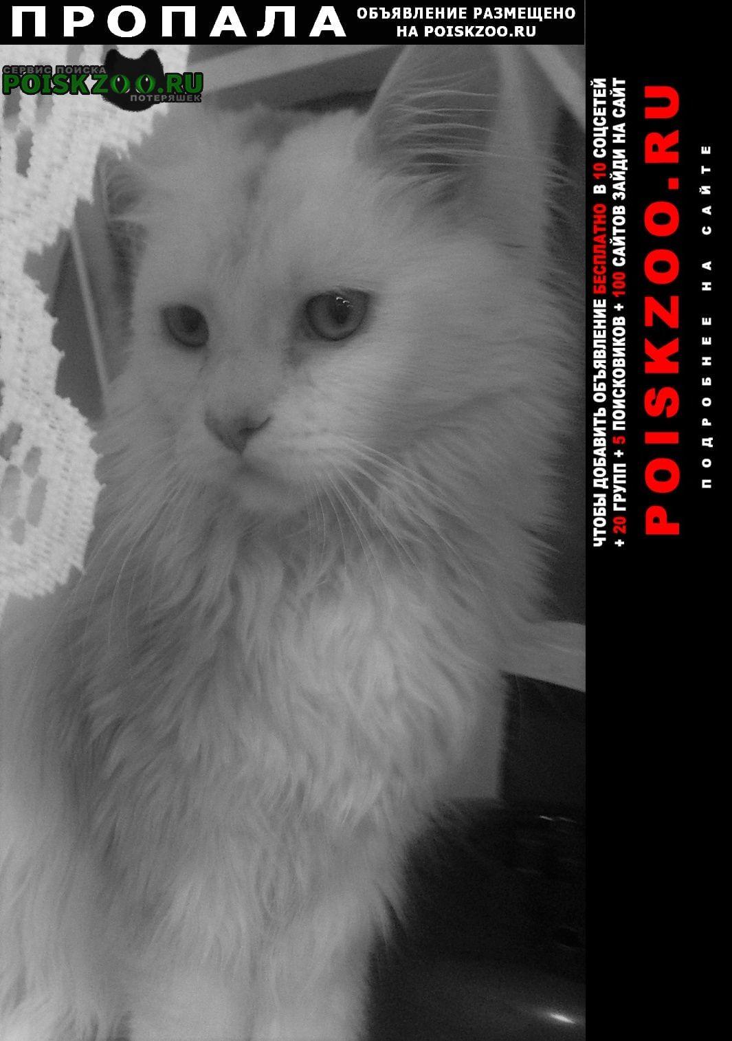 Пропала кошка.. в рабочем поселке Волжский (Волгоградская обл.)
