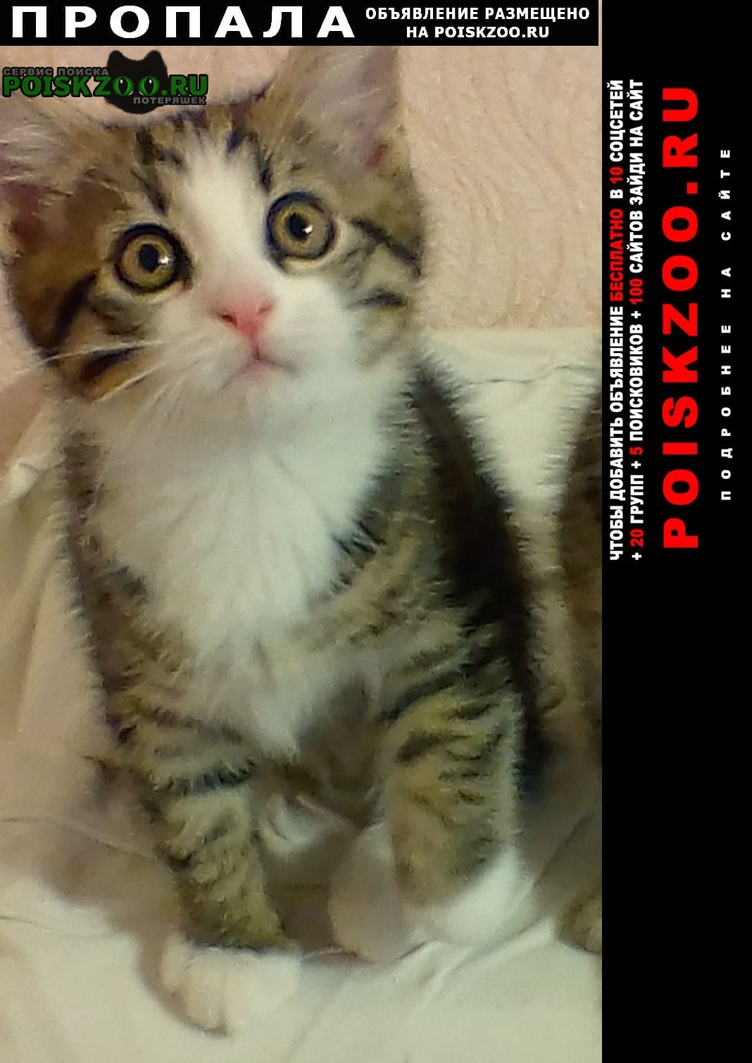 Георгиевск Пропала кошка любимый кот в станице незлобной