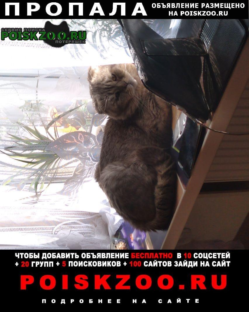 Пропала кошка Монино
