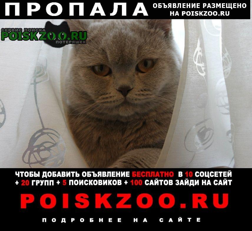 Пропала кошка кот Санкт-Петербург