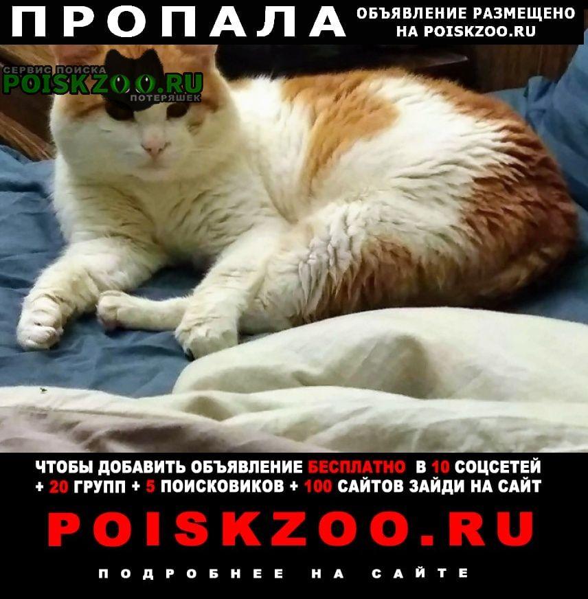 Сергиев Посад Пропала кошка пожалуйста помогите найти